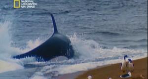 وحش البحر الرهيب
