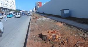 سكان طنجة ينتظرون أن يفي العمدة بوعده ويزرع مائة ألف شجرة