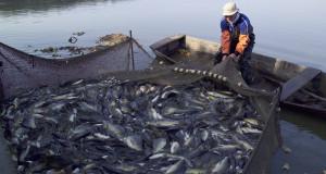 المغرب يؤجل موعد دخول سفن الصيد الأوروبية إلى شتنبر