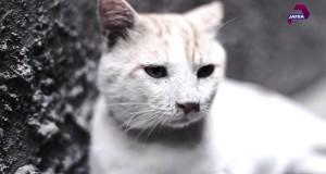 قصة القطط مع العدوان على غزة