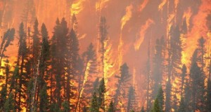 إخماد الحريق الغابوي الذي شب بجماعة عليين بإقليم المضيق الفنيدق