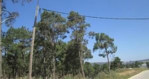 طنجة الضاحكة: كهرباء خلال النهار.. والأسلاك تمتد داخل الغابة