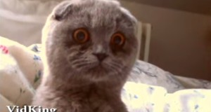 قطط غريبة
