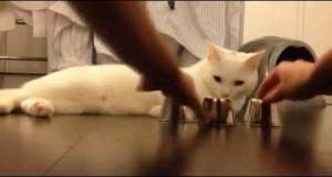 من يخدع هذا القط؟