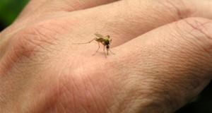 كيف تحمي نفسك من لسعات الحشرات في الصيف