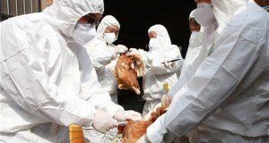 هل تتذكرون وباء أنفلونزا الطيور؟ يمكن أن يعود بشكل أكثر حدة