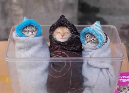 البرد مستمر..