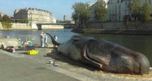 حوت على ضفّة نهر السين في باريس!