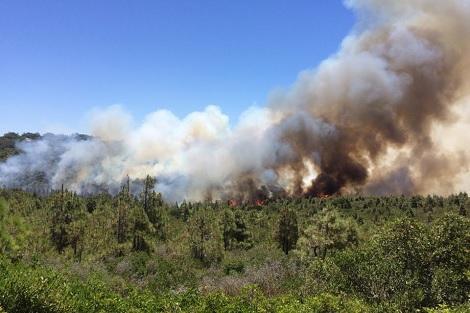 حريق غابات السلوقية ومديونة بطنجة: النار الطبيعية التي تخفي جحيم الأطماع البشرية..!