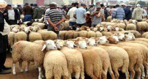 بلاغ رسمي: جهة طنجة تتوفر على اكتفاء ذاتي من الماعز وتستورد 55% من حاجياتها من الأغنام من خارج الجهة