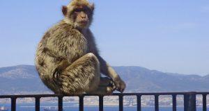 نافذة على الجيران:جبل طارق