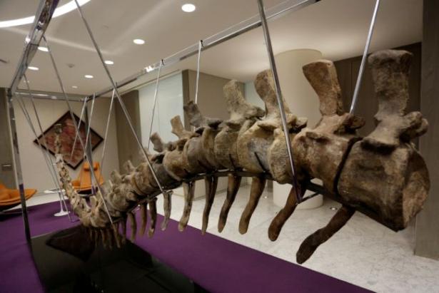 ذيل ديناصور مغربي وصل إلى المكسيك في ظروف غامضة،، والسلطات تفتح تحقيقا
