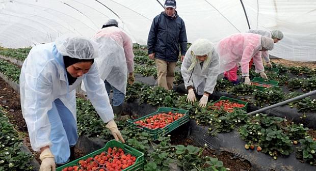 وزارة التشغيل تؤكد أن عملية انتقاء العاملات المغربيات بإسبانيا تمت بشفافية عكس ما يُروّج له
