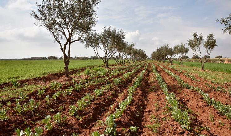 الحدود المغربية الجزائرية: من مخاطر التهريب إلى ازدهار الفلاحة