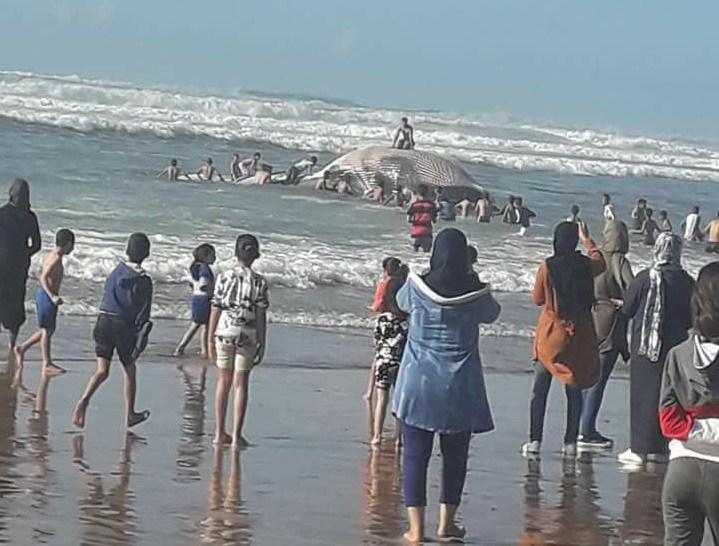 الحوت الأزرق يظهر قرب الدار البيضاء
