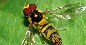 الذباب الأصفر يغادر طنجة احتجاجا على إهانة مرصد حماية البيئة