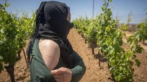 سلطات مدريد ترفض منح التأشيرة للجنة تحقيق مغربية في الاعتداءات على العاملات المغربيات في حقول الفراولة