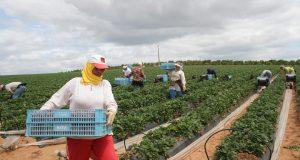 رْوينة: فرار جماعي في صفوف مغربيات الفراولة بإسبانيا