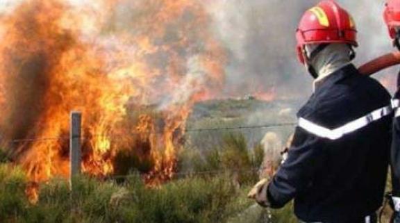 السيطرة على حريق غابة غمارة في إقليم شفشاون