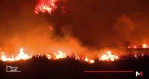 حرائق غابات طنجة