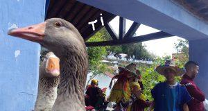 الحيوانات تساهم في الازدهار السياحي لشفشاون