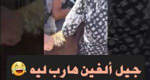 مظاهرة بلا عقل.. ولا عقال
