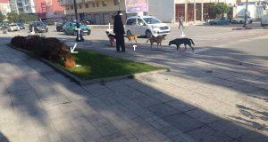 الكلاب الضالة في طنجة: خطر حقيقي لا أحد يأبه به