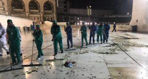 ملايين الصراصير تهاجم مكة