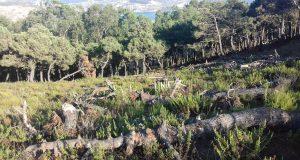 مواصلة تدمير غابات فحص أنجرة بطنجة أمام عيون مندوبية المياه والغابات