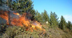 شبهات بكونه مفتعل: حريق بإحدى غابات خميس أنجرة بطنجة