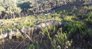 سلوكيات خطيرة لمراقب المياه والغابات في جماعة أنجرة بطنجة.. وصمت الجهات المسؤولة