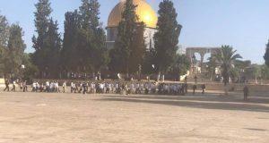 قبيل العيد: مئات الصهاينة يقتحمون باحة المسجد الأقصى