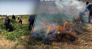 بعد فضيحة النعناع الملوث: دعوات لحماية المغاربة من خطر المبيدات
