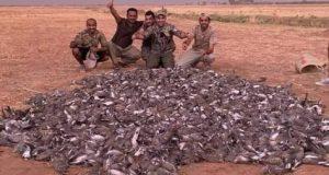 خليجيون يقضون على طيور المغرب: اصطادوا 1500 طائر سمان في يوم واحد..!