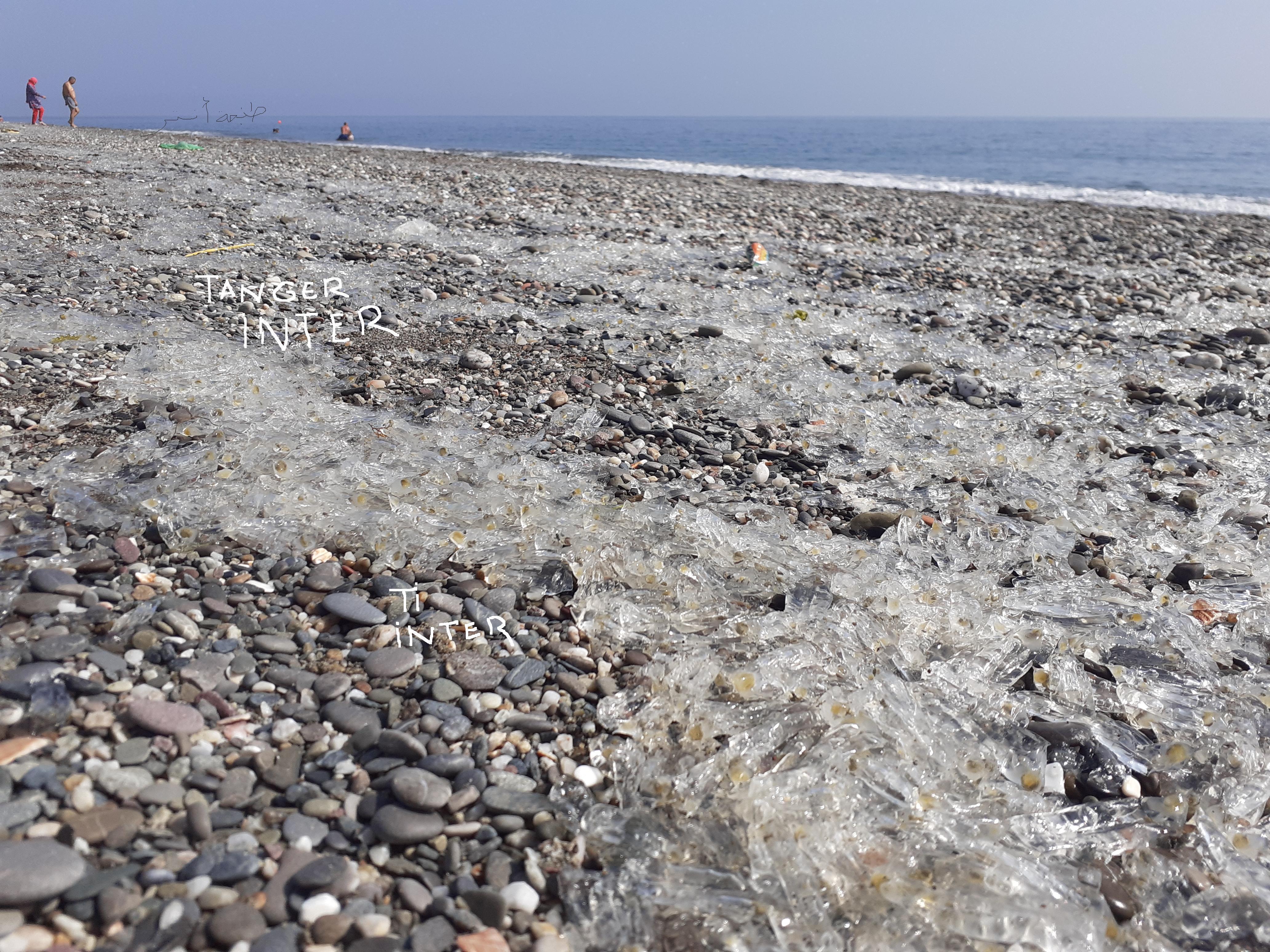 """ملايير بيوض """"أكوا بيبا"""" تغزو شواطئ الشمال + صور"""