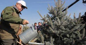تركيا تزرع 300 ألف شجرة في ساعة واحدة.. وتدخل موسوعة غينيس