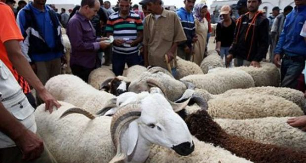 بسبب كورونا.. حزب مغربي يطالب الحكومة بإلغاء عيد الأضحى مراعاةً للظروف الصعبة للأسر المغربية