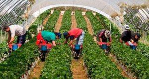 آلاف العاملات المغربيات بإسبانيا في ورطة