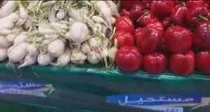 فئران بخضروات مرجان