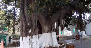 الشجرة الفريدة